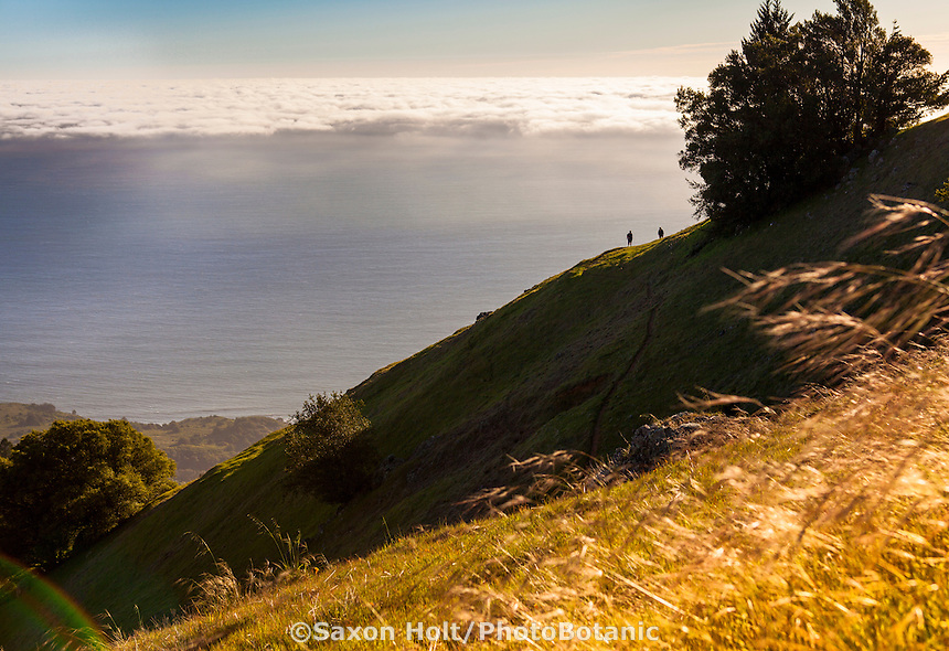 Hikers looking out to ocean from hill ridge on Mount Tamalpias State Park California overlooking fog to Pacific Ocean