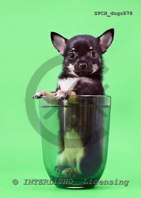Xavier, ANIMALS, dogs, photos+++++,SPCHDOGS878,#a# Hunde, perros
