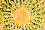 Phoenix, Arizona; a Golden Barrel Cactus (Echinocactus grusonii) seen from above forms a spiral pattern