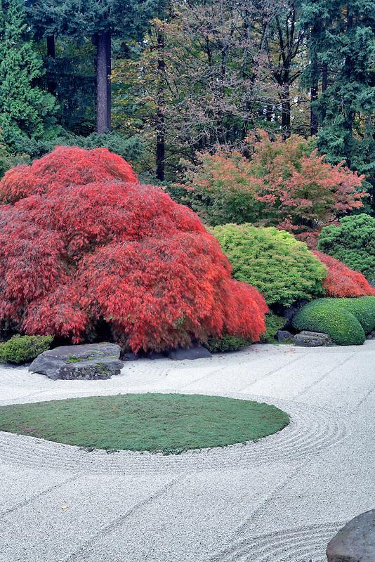 Rock garden with fall color. Japanese Gargens. Portland. Oregon