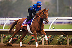 DEL MAR, CA - OCTOBER 28:  Wuheida, owned by Godolphin Stable Lessee and trained by Charlie Appleby, exercises in preparation for Breeders' Cup Filly & Mare Turfat Del Mar Thoroughbred Club on October 28, 2017 in Del Mar, California. (Photo by Alex Evers/Eclipse Sportswire/Breeders Cup)