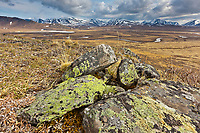 Green lichen on rocks, Brooks Range, near the junction of the Gates of the Arctic National Park and the National Petroleum Reserve, Alaska.