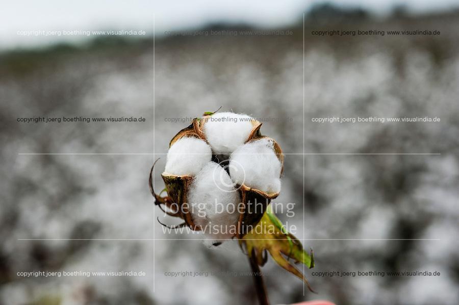 TURKEY, Kesik, near Menemen, conventional cotton ready for picking machine harvest after spraying of defoliants / TUERKEI, Kesik, bei Menemen, konventioneller Baumwollanbau, nach Verspruehen eines Entlaubungsmittel ist die Baumwolle erntebereit fuer Pflueckmaschinen