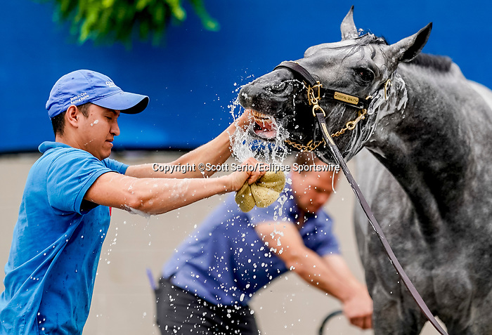 April 29, 2021: Essential Quality, trained by trainer Brad Cox, gets a bath after exercising at Churchill Downs on April 29, 2021 in Louisville, Kentucky. Scott Serio/Eclipse Sportswire/CSM