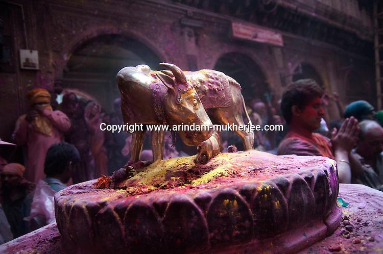 A statue of holy cow at Banke Bihari Temple in Vrindavan, 8th March 2012, Uttar Pradesh, India.