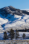 The early morning sun lights the hillside on a cold winter day in Yellowstone National Park, Wyoming.