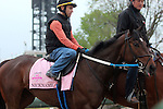 LOUISVILLE, KY - APRIL 23: Nickname (Scat Daddy x Nina Fever, by Borrego) goes to the track at Churchill Downs to prepare for the Kentucky Oaks. Owner LNJ Foxwoods, trainer Steven M. Asmussen. (Photo by Mary M. Meek/Eclipse Sportswire/Getty Images)