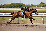 #132Fasig-Tipton Florida Sale,Under Tack Show. Palm Meadows Florida 03-23-2012 Arron Haggart/Eclipse Sportswire.