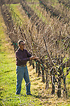 Ben Zeitman and Katie Quinn, owners/winemakers at Amador Foothill Winery in Amador County...Ben checks the vines before pruning in late winter.