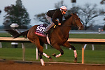 Frank'S Rockette, trained by trainer William I. Mott, exercises in preparation for the Breeders' Cup Sprint at Keeneland Racetrack in Lexington, Kentucky on November 1, 2020. /CSM