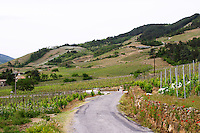 vineyard winding road through vineyards cornas rhone france