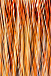 Abstracts of river reeds with  diagonal motion