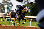 October 22, 2015: Liam's Map, trained by Todd Pletcher, and owned by Teresa Viola Racing Stables, and West Point Thoroughbreds, is entered to run in the Breeder's Cup Las Vegas Dirt Mile $1,000,000.    Candice Chavez/ESW/CSM