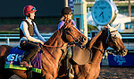 ARCADIA, CA - NOV 02: Dutch Connection, owned by Godolphin LLC Lessee and trained by Charles Hills, exercises in preparation for the Breeders' Cup Mile at Santa Anita Park on November 2, 2016 in Arcadia, California. (Photo by Douglas DeFelice/Eclipse Sportswire/Breeders Cup)