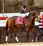 DECEMBER 01, 2018 : #1, Jungle Warrior in the Remsen  Stakes at Aqueduct Racetrack on December 24, 2018 in Ozone Park, NY.  Sue Kawczynski/ESW/CSM
