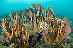 Manuk Island, Banda Sea, Indonesia; a mixture of hard and soft corals creates an underwater city scape on the reef