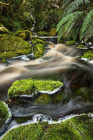 Forest stream in Oparara Valley, West Coast, Buller Region, Kahurangi National Park, New Zealand