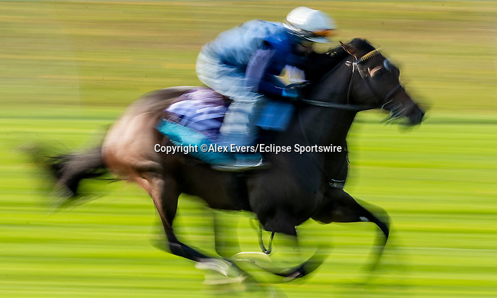 November 1, 2020: Gypsy King, trained by trainer Wesley A. Ward, exercises in preparation for the Breeders' Cup Juvenile Turf at  Keeneland Racetrack in Lexington, Kentucky on November 1, 2020. Alex Evers/Eclipse Sportswire/Breeders Cup /CSM