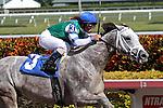 #3 Anchor Down  with jockey Javier Castellano on board breaks her maiden at  Gulfstream Park, Hallandale Beach, Florida 01-25-2014