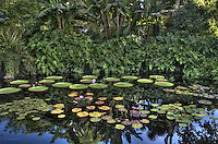 Pond with Lily Pads and Reflection of Blue Sky, HDR Image, Fairchild Tropical Botanic Gardens, Miami Nature,<br />