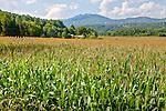Farmland in Stowe, VT, USA