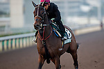 SHA TIN,HONG KONG-DECEMBER 09: Helene Happy Star,trained by John Moore,exercises in preparation for the Hong Kong at Sha Tin Racecourse on December 9,2016 in Sha Tin,New Territories,Hong Kong (Photo by Kaz Ishida/Eclipse Sportswire/Getty Images)
