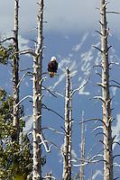Cordova, Copper River Delta, Chugach National Forest, Alaska.