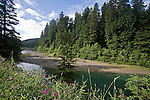 California, Redwood trees, Eel River, Old Growth forest, Humboldt Redwoods State Park, Humboldt County, California, USA,