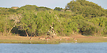 Yala National Park Sri Lanka<br /> Spotted Deer and birds