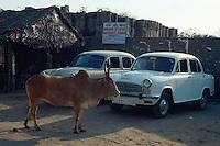 Kuh vor Taxis in Mahabalipuram, Tamil Nadu, Indien