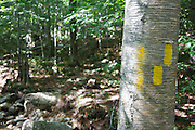 September 2011 - Trail blaze along the Mt Tecumseh Trail, at a brook crossing, in the New Hampshire White Mountains. Proper technique is two paint marks (on right) to indicate the trail turns right. After a trail inspection by Forest Service in June 2012, the non-conforming blazing was removed by proper parties.