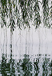 Weeping willow branches skim the top of a lake, China