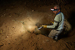 Black-footed Cat (Felis nigripes) veterinarian, Arne Lawrenz, digging out male for collaring, Benfontein Nature Reserve, South Africa