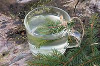 Fichtennadel-Tee, Fichtennadeltee, Fichten-Tee, Fichtentee, Tee aus Fichtennadeln, Heiltee, Kräutertee, Erkältungstee, spruce needle, spruce needles, herb tea, herbal tea, tea. Gewöhnliche Fichte, Fichte, Rot-Fichte, Rotfichte, Picea abies, Common Spruce, Spruce, Norway spruce, L'Épicéa, Épicéa commun
