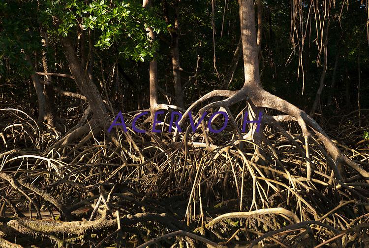 Raízes aéreas nos manguezais da praia de Paxicú na Reserva Extrativista Marinha Mãe Grande localizada no litoral do Pará, na foz do rio Amazonas. Na foz do Amazonas pescadores capturam diariamente cerca de 200 quilos de pescado de várias espécies como: piramutabas, sardinhas, filhotes, pescada amarela, robalo e tainhas.<br /> Curuçá, Pará, Brasil. <br /> Foto: Paulo Santos <br /> 23/07/2009