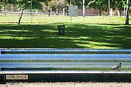 Image Ref: W003<br /> Location: Healesville<br /> Date of Shot: 9th November 2013