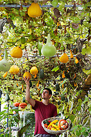 BNPS.co.uk (01202 558833)<br /> Pic: ZachCulpin/BNPS<br /> <br /> Colourful autumn Harvest at Forde Abbey in Dorset.<br /> <br /> Kitchen Gardener, Olly Hone admires one of newly picked summer squashes.<br /> <br /> Colourful pumpkins, squashes and gourds at the Forde Abbey Monastery on the Dorset/Somerest boarder.<br /> <br /> Forde Abbey is a former Cistercian monastery dating back to the early 12th century