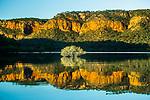 Mangrove, Prince Regent River, Kimberley, Western Australia