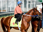 LOUISVILLE, KY - MAY 01: Gun Runner, trained by Steven Asmussen and owned by Winchell Thoroughbreds LLC and Three Chimneys Farm, exercises and prepares during morning workouts for the Kentucky Derby and Kentucky Oaks at Churchill Downs on May 1, 2016 in Louisville, Kentucky. (photo by John Voorhees/Eclipse Sportswire/Getty Images)