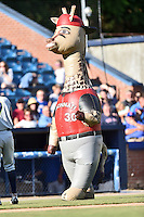 ZOOperstars Ken Giraffey Jr. during a game between the Columbia Fireflies and the Asheville Tourists at McCormick Field on June 18, 2016 in Asheville, North Carolina. The Tourists defeated the Fireflies 5-4. (Tony Farlow/Four Seam Images)