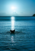 Mermaid Blue<br />