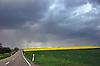 gelb blühendes Rapsfeld unter dunkelgrauen Regenwolken