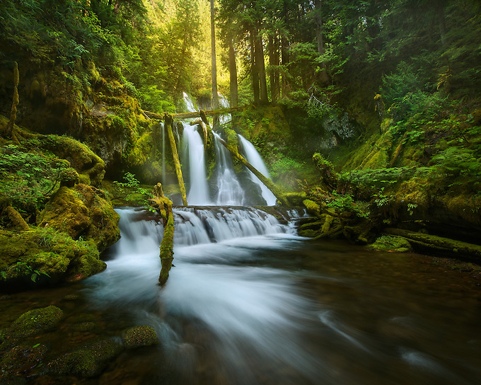 A waterfall through an old growth forest on the Washington side of the Columbia Gorge.