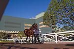 OCT 4,2014:Rich Tapestry,ridden by Oliver Doleuze,wins Santa Anita Sprint Championship at Santa Anita Park in Arcadia,CA. Kazushi Ishida/ESW/CSM