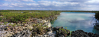 Iles Bahamas /Ile d'Andros/South Andros : la Mangrove et un trou bleu, puits profond dans le récif coralien //  Bahamas Islands / Andros Island / South Andros: the Mangrove and a blue hole, deep well in the coral reef