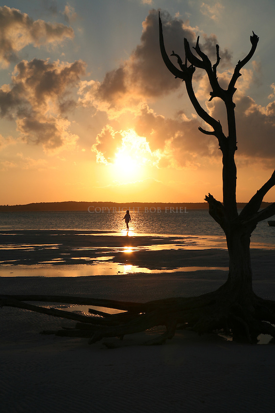 the famous Lone Tree on Harbour Island, Bahamas