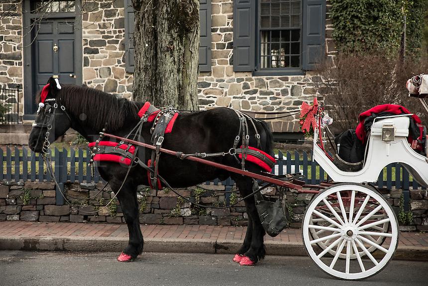 Holiday horse drawn carriage rides, New Hope, Pennsylvania, USA