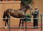 September 09, 2014: Hip #251 More Than Ready - Silver Reunion filly consigned by Brereton C. Jones/Airdrie Stud sold for $500,000 to John Ferguson at the Keeneland September Yearling Sale.   Candice Chavez/ESW/CSM