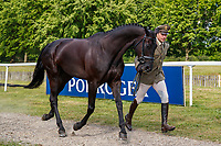 ITA-Giovanni Ugolotti presents Swirly Temptress during the First Horse Inspection for the CCI-L2* Section D.  2019 GBR-Saracen Horse Feeds Houghton International Horse Trial. Wednesday 22 May. Copyright Photo: Libby Law Photography