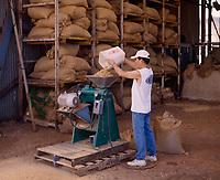 Kona Coffee plantation worker processing beans with sheller huller machine, Big Island, Hawaii, USA.